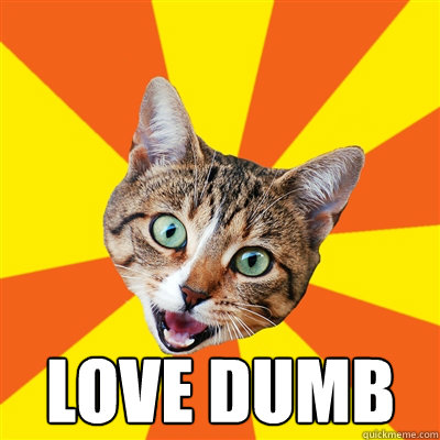 Love dumb   -  Love dumb    Bad Advice Cat