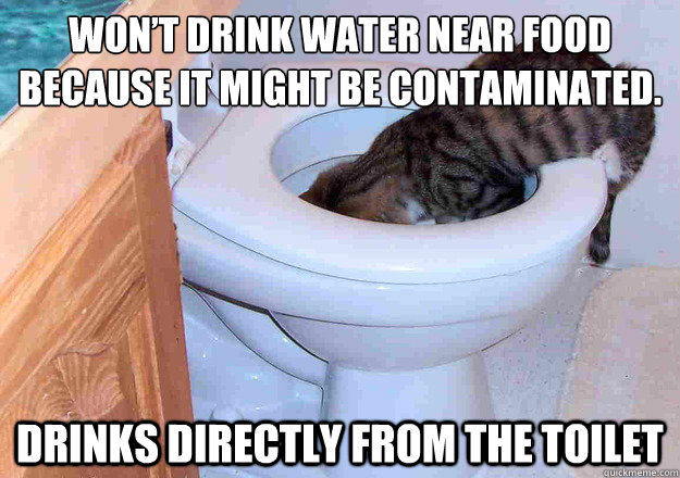 Won't drink water near food because it might be contaminated. Drinks directly from the toilet - Won't drink water near food because it might be contaminated. Drinks directly from the toilet  Contradictory Cat