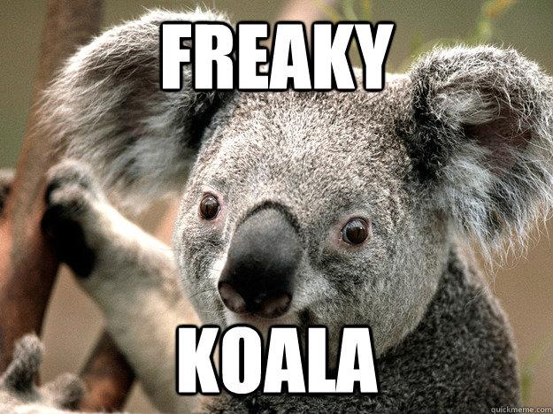 freaky koala