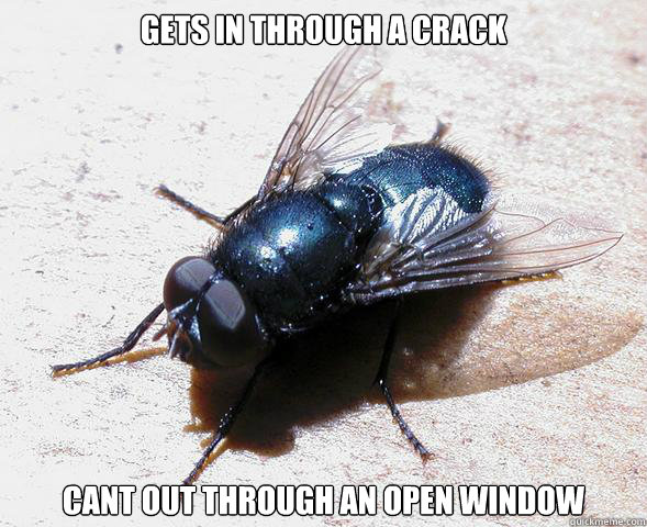 gets in through a crack cant out through an open window