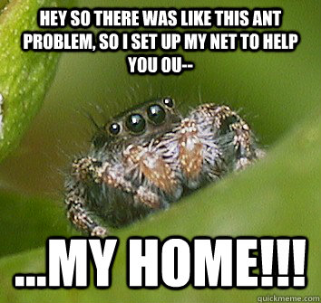 Hey so there was like this ant problem, so i set up my net to help you ou-- ...my home!!! - Hey so there was like this ant problem, so i set up my net to help you ou-- ...my home!!!  Misunderstood Spider