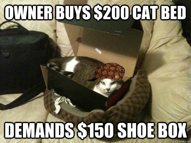 Owner buys $200 cat bed demands $150 shoe box  - Owner buys $200 cat bed demands $150 shoe box   scumbag cat box