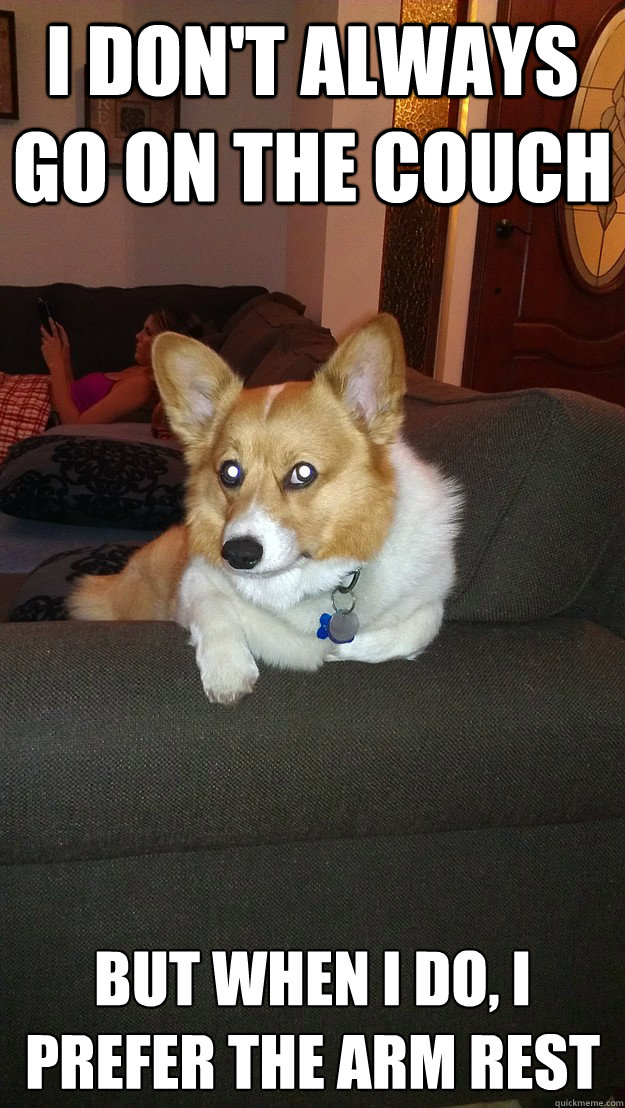 8bf51caa5885ed7003eba591f91f14b10f33507b0c3c04c005314a1c4832e894 most interesting dog on the couch memes quickmeme