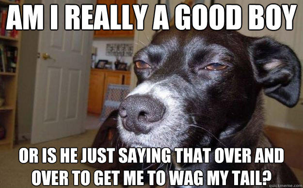 am i really a good boy or is he just saying that over and over to get me to wag my tail?  Skeptical Mutt