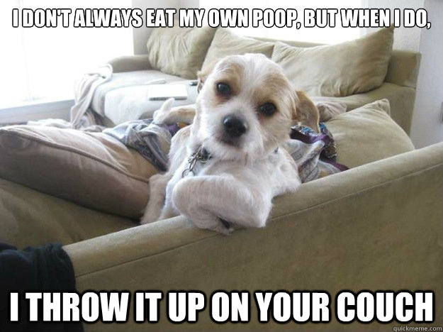 I don't always eat my own poop, but when I do, I throw it up on your couch  The Most Interesting Dog in the World