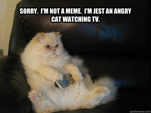 Sorry Im Not A Meme Im Jest An Angry Cat Watching Tv
