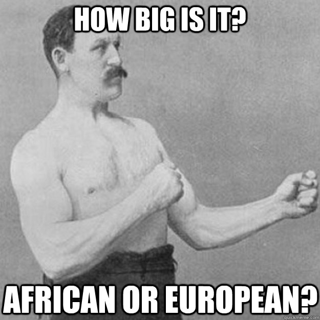 how big is it? african or european? - how big is it? african or european?  overly manly man