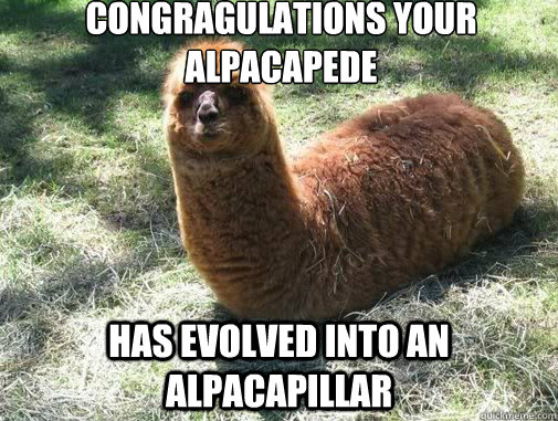 congragulations your alpacapede has evolved into an alpacapillar   Alpacapillar