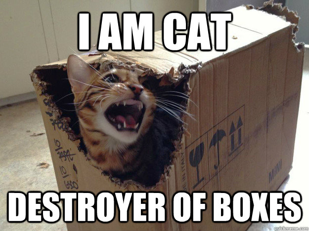 I am cat destroyer of boxes