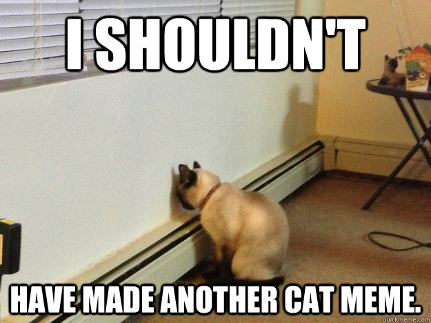 I shouldn't have made another cat meme. - I shouldn't have made another cat meme.  Regretful Cat