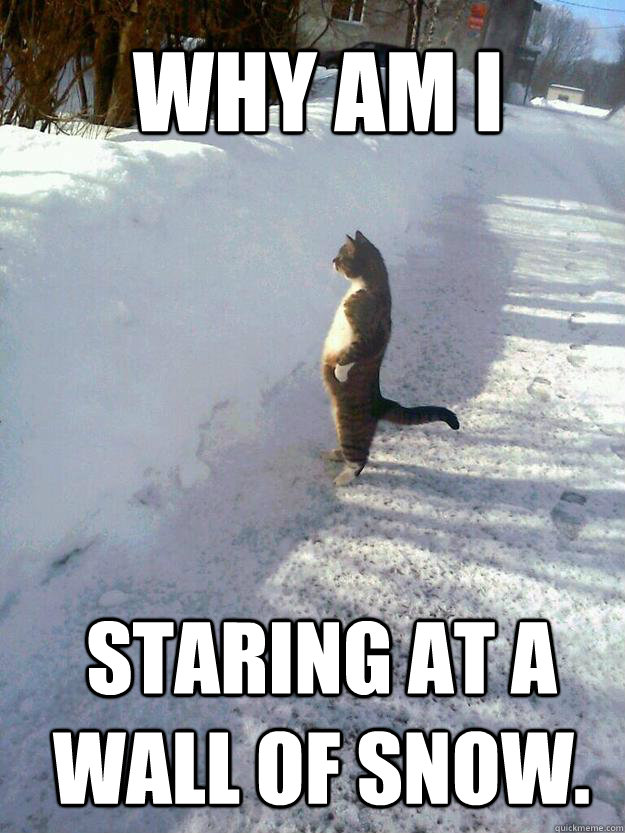 Why am I  staring at a wall of snow.