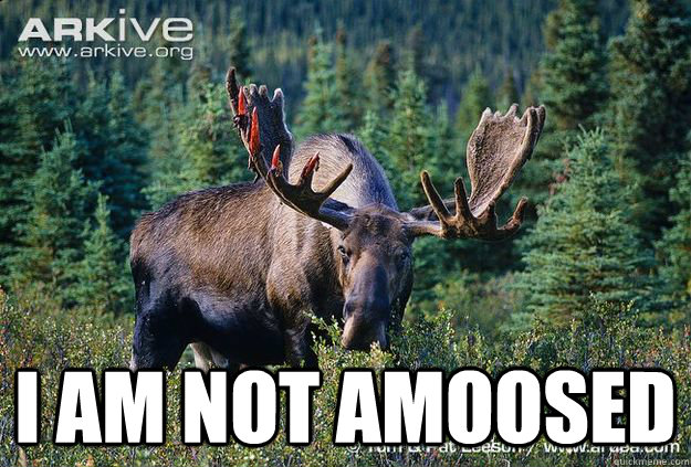 I AM NOT AMOOSED  Another Moose meme