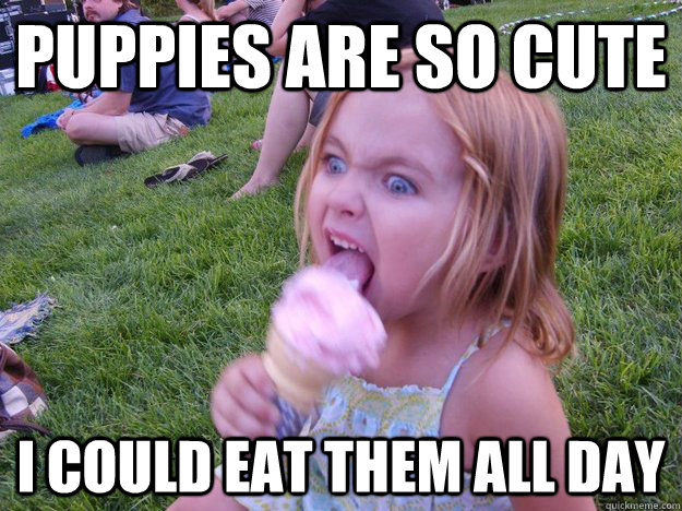 8cd46612087b106837045da17c796b6f972c573a76ac4d1ae93afc4e06136c7e puppies are so cute i could eat them all day psycho girl quickmeme