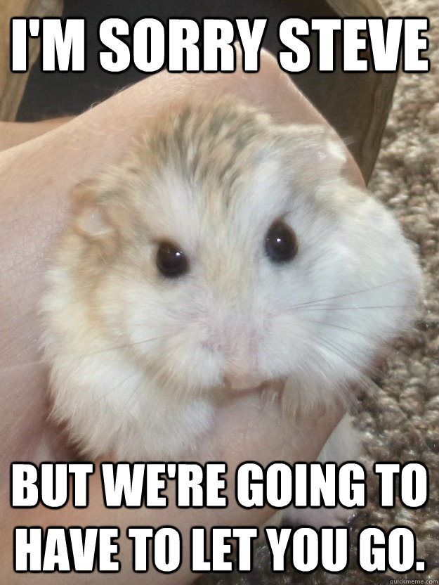 I'm sorry Steve But we're going to have to let you go.   Sad Hamster