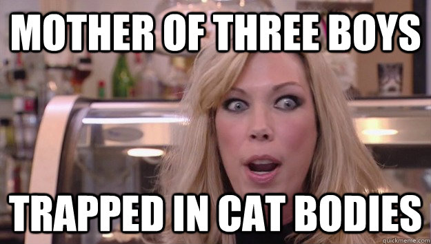 Mother of three boys trapped in cat bodies