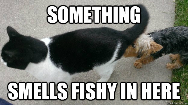 Something Smells Fishy In Here - Fishy Cat - quickmeme