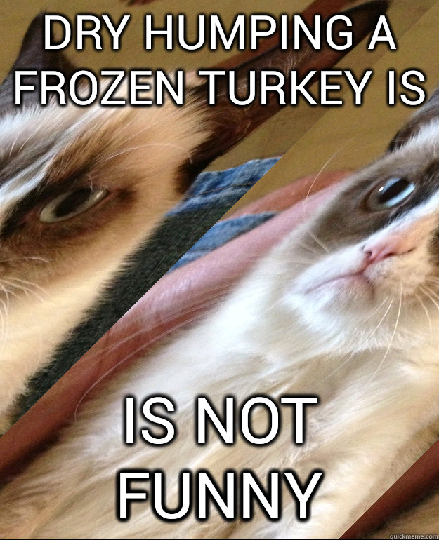 dry humping a frozen turkey is is not funny - Grumpy Cat - quickmeme