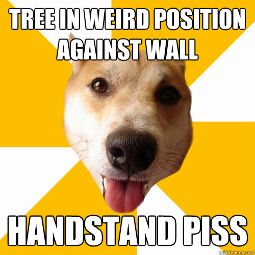 TREE IN WEIRD POSITION AGAINST WALL HANDSTAND PISS  Territorial Shiba Inu