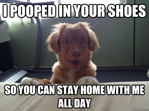 i pooped in your shoes so you can stay home with me all day - i pooped in your shoes so you can stay home with me all day  Overly Attached Dog