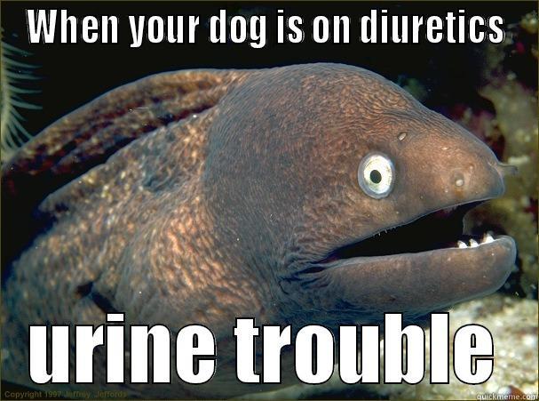 WHEN YOUR DOG IS ON DIURETICS URINE TROUBLE Bad Joke Eel