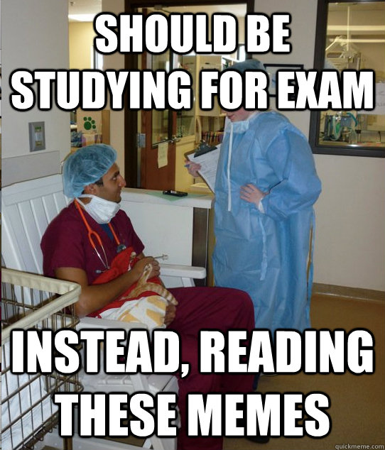 should be studying for exam instead, reading these memes - should be studying for exam instead, reading these memes  Overworked Veterinary Student