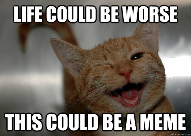 life could be worse this could be a meme - life could be worse this could be a meme  Cheer up Cat