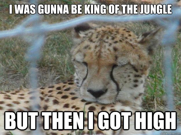 10 Cheetah Memes Quickmeme