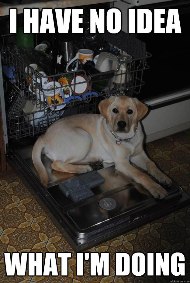 I have No idea  What I'm doing   Dishwasher Dog