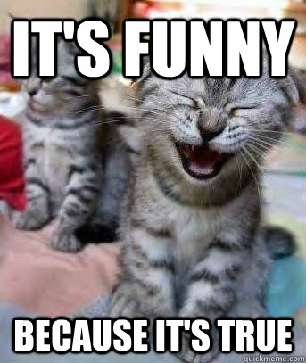 It's Funny Because it's true - It's Funny Because it's true  funny cat