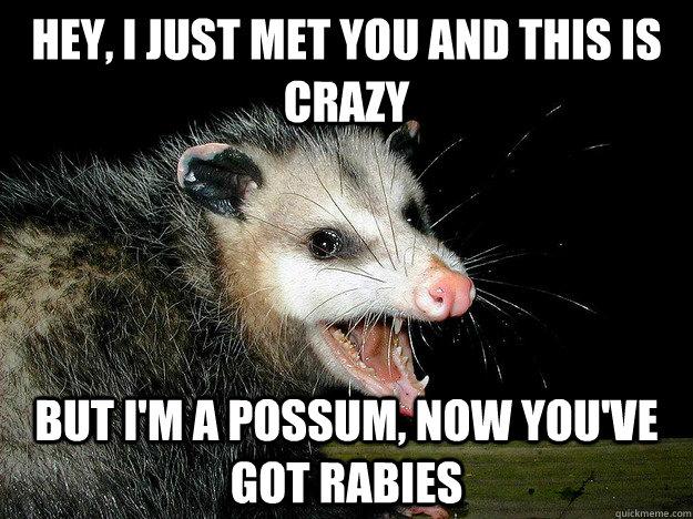 Rally Possum vs Opossum   TigerDroppings com