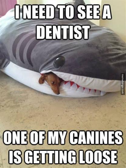 I need to see a dentist. -   Misc