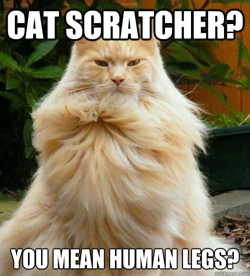 8fba6b9a3bde9587dd5d0fec9854c9d02f38cc262ba2c6cef5653c743d25b484 cat scratcher? you mean human legs? overly manly cat quickmeme