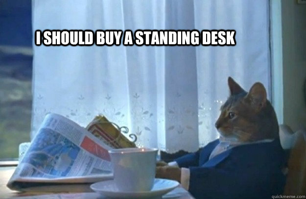 i should buy a standing desk  - i should buy a standing desk   Sophisticated Cat