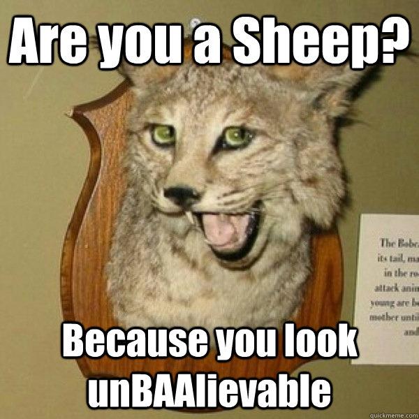 Bad Pick Up Line Cat memes   quickmeme