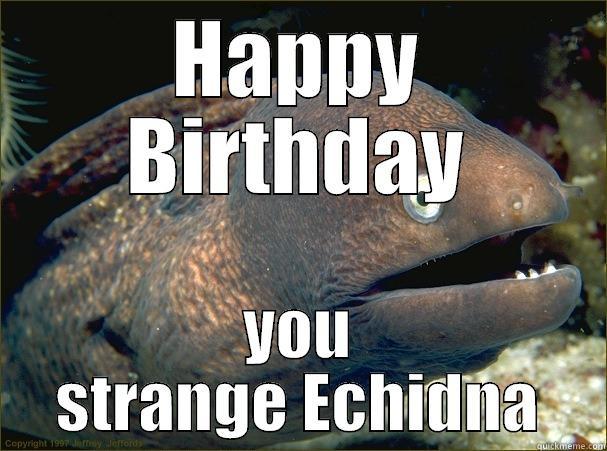 HAPPY BIRTHDAY YOU STRANGE ECHIDNA Bad Joke Eel
