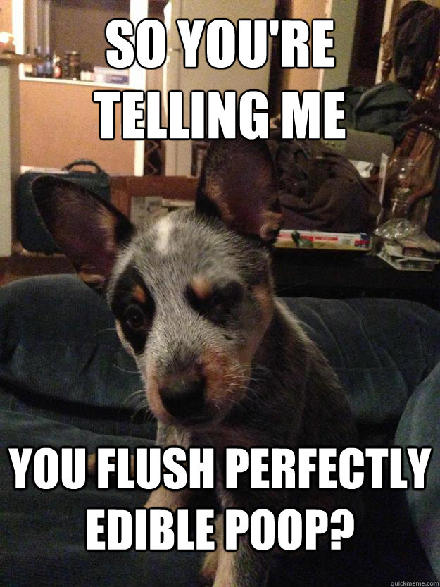 So you're  telling me You flush perfectly edible poop? - So you're  telling me You flush perfectly edible poop?  Skeptical Dog