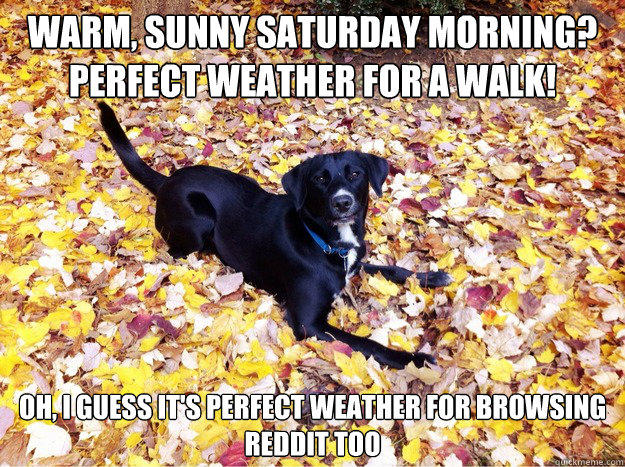 Warm, sunny saturday morning? perfect weather for a walk! Oh, I guess it's perfect weather for browsing reddit too