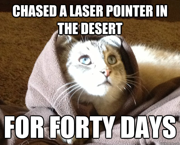Chased a laser pointer in the desert for forty days  - Chased a laser pointer in the desert for forty days   Kitty Jesus