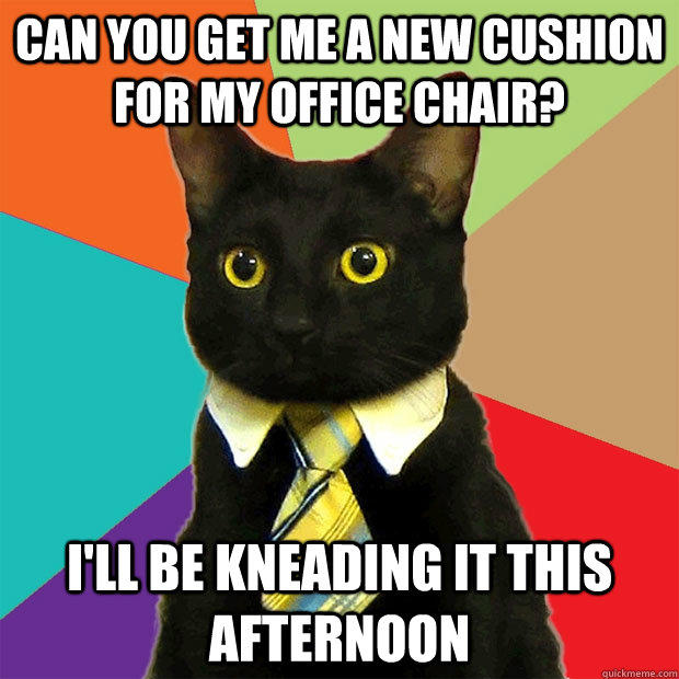 can you get me a new cushion for my office chair? I'll be kneading it this afternoon - can you get me a new cushion for my office chair? I'll be kneading it this afternoon  Business Cat