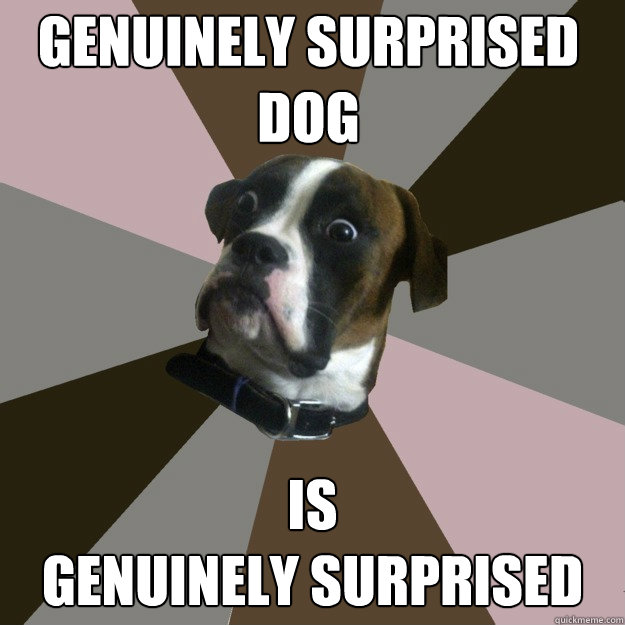 genuinely surprised dog is genuinely surprised