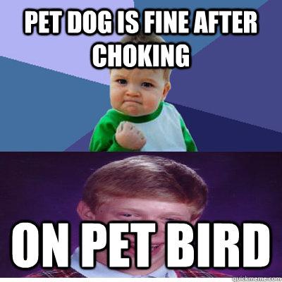 Pet dog is fine after choking on pet bird