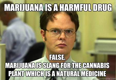 Marijuana is a harmful drug False.  Marijuana is slang for the Cannabis plant which is a natural medicine - Marijuana is a harmful drug False.  Marijuana is slang for the Cannabis plant which is a natural medicine  Dwight