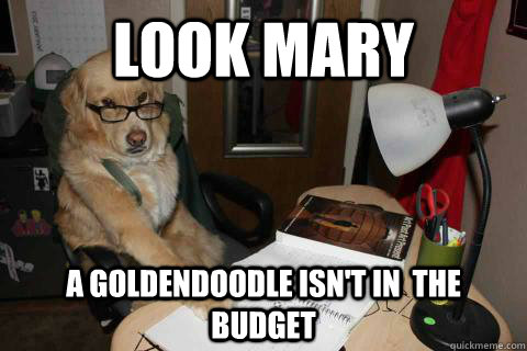Look Mary A goldendoodle isn't in  the budget - Look Mary A goldendoodle isn't in  the budget  Financial Advice Dog