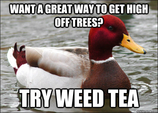 want a great way to get high off trees? try weed tea - want a great way to get high off trees? try weed tea  Malicious Advice Mallard