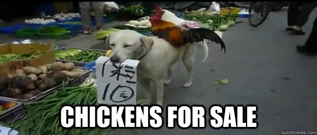 Chickens for sale -  Chickens for sale  Chickens for sale