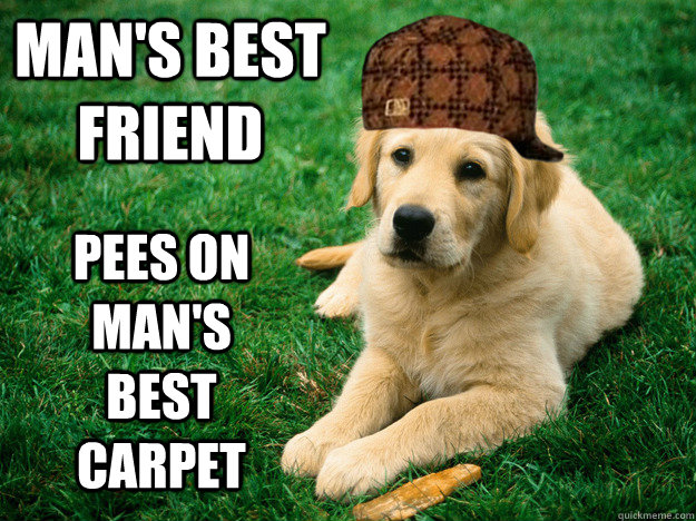 Man's best friend pees on man's best carpet