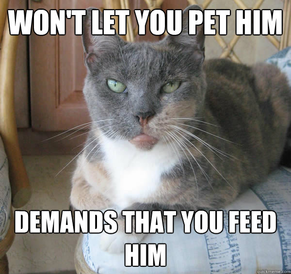 7c5e011e5 Won t let you pet him Demands that you feed him Anti-social cat