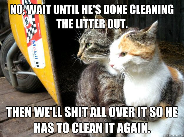 No, wait until he's done cleaning the litter out. Then we'll shit all over it so he has to clean it again. - No, wait until he's done cleaning the litter out. Then we'll shit all over it so he has to clean it again.  Restraining Cat