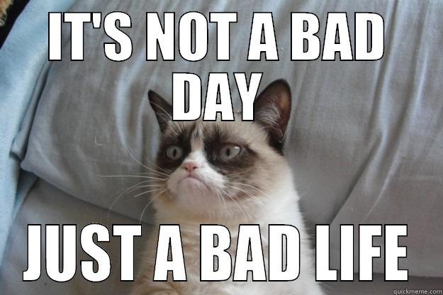 Bad Day Meme Funny : Depressed animal bad day at work for a tired meerkat funny cut