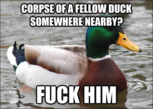 Corpse of a fellow duck somewhere nearby? Fuck him - Corpse of a fellow duck somewhere nearby? Fuck him  Actual Advice Mallard